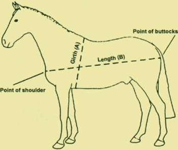 Horsing around with measurements