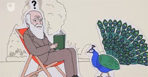 OU Video: Patterns of Life – Charles Darwin and Game theory (#1/5)